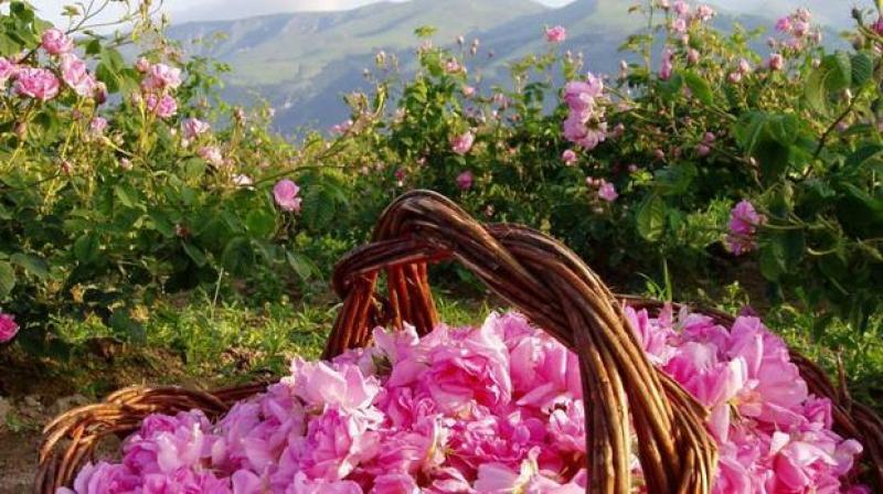 Долината на розите и тракийските царе
